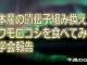 【Vlog】日本産の遺伝子組み換えトウモロコシを食べてみた-見学会報告
