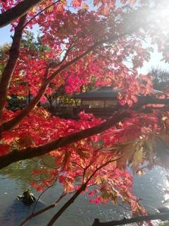 ▲ウィ―ンの世田谷公園の秋風景(2017年10月15日、ウィ―ンで撮影)